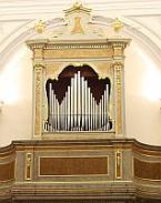 Adriatic Organ Model